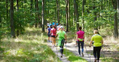 Uczestnicy marszu nordic walking na ścieżce leśnej w Puszczy Zielonka.